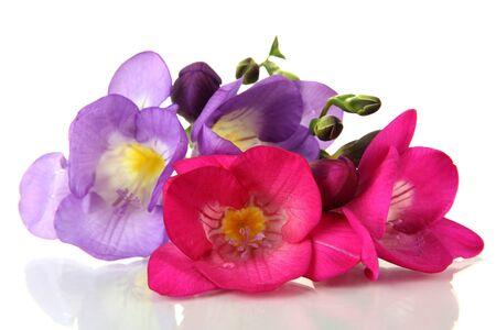 freesia: Bouquet of freesias flower, isolated on white