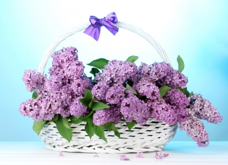 beautiful lilac flowers in basket on blue background photo
