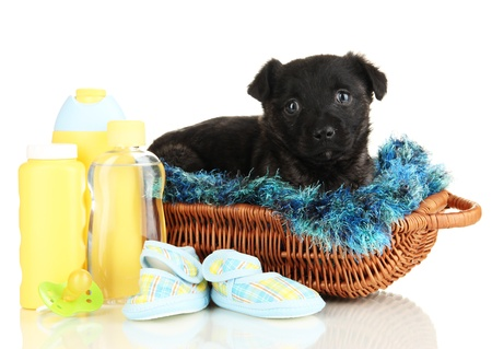 Cute puppy in basket isolated on white Stock Photo - 17760949