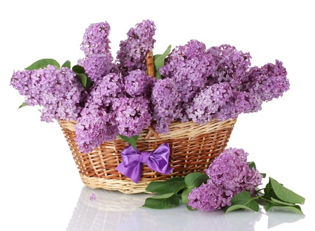 beautiful lilac flowers in basket isolated on white photo