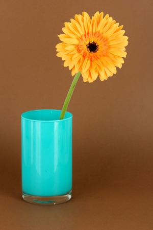 Beautiful Gerber flower on brown background Stock Photo - 17865912