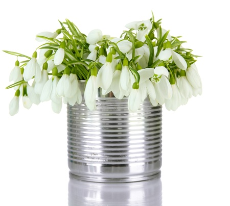 Bouquet of snowdrop flowers in metal can, isolated on white photo