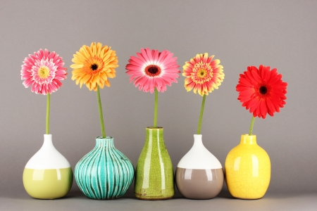 Beautiful Gerber flowers on grey background Stock Photo - 17979020