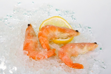 Shrimps on ice photo