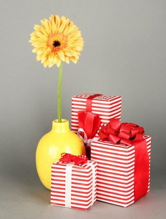 Beautiful Gerber flower with gifts on grey background photo