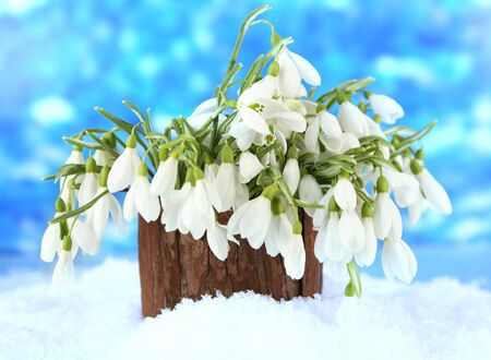 Bouquet of snowdrop flowers in vase with snow, on bright background photo