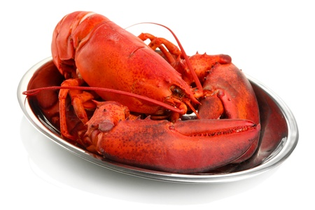 Red lobster on tray, isolated on white photo