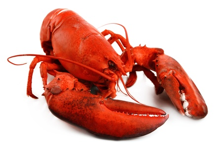 Red lobster isolated on white photo