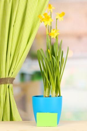Beautiful yellow daffodils in flowerpot on window background photo