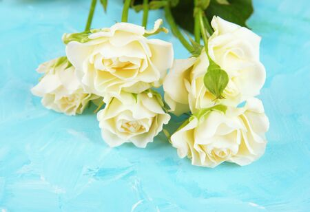 Beautiful white roses close-up, on color background photo