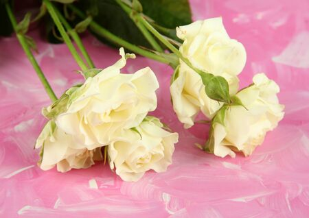 Beautiful white roses close-up, on color background Stock Photo - 18508278