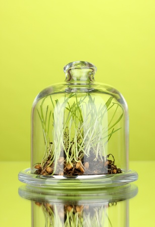 Grass under glass cover on green background photo