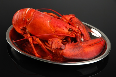 Red lobster on tray, on black background photo
