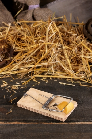 Mousetrap with a piece of cheese close-up in barn on wooden background photo
