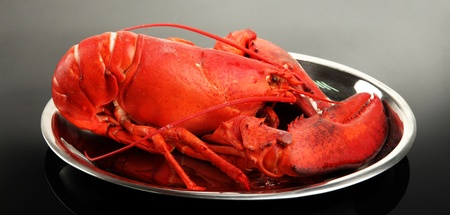 Red lobster on tray, on grey background photo