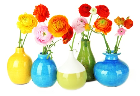 buttercups: Ranunculus (persian buttercups) in vases, isolated on white