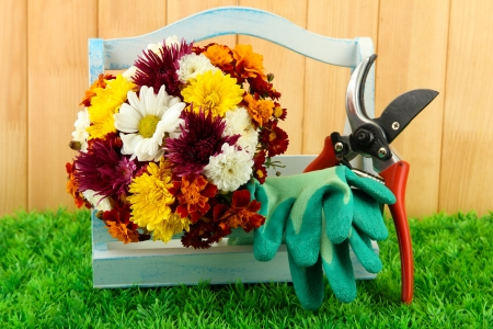 Secateurs with flowers in box on fence background photo