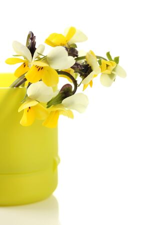Little wild pansies in vase, isolated on white photo