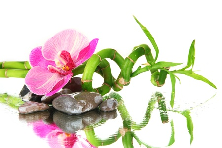 Still life with green bamboo plant, orchid and stones, on white background photo