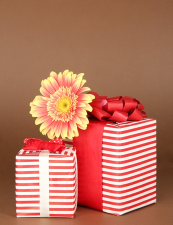 Beautiful Gerber flower with gifts on brown background photo