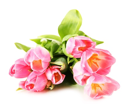Pink tulips isolated on white photo