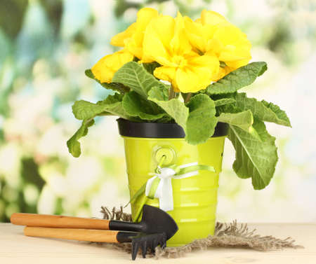 Beautiful yellow primula in flowerpot on wooden table on green background Stock Photo - 19173882