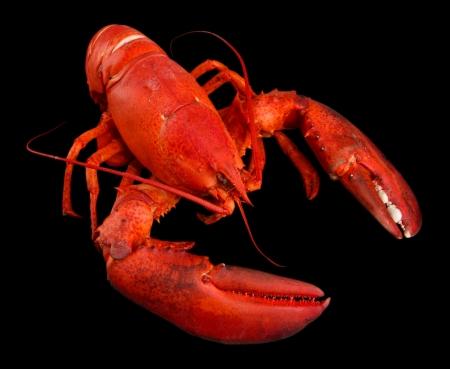 lobster: 검은 색 바탕에 붉은 가재, 스톡 사진