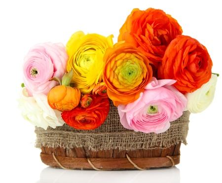 Ranunculus (persian buttercups) in basket, isolated on white photo