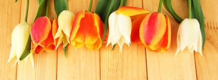 Beautiful white and orange tulips on wooden background photo