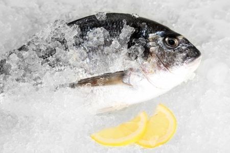 Dorado fish on ice photo