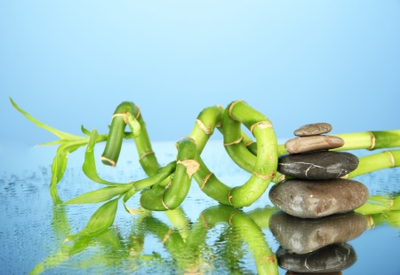 Still life with green bamboo plant and stones, on blue background photo