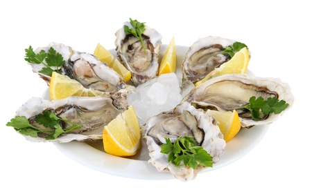oyster shell: Oysters isolated on white