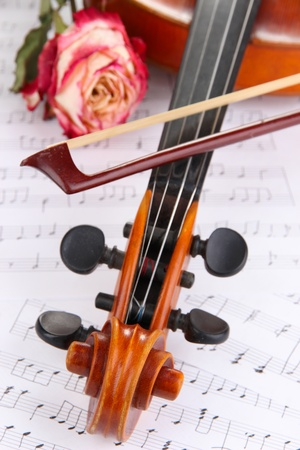 Classical violin  with dry rose on notes photo