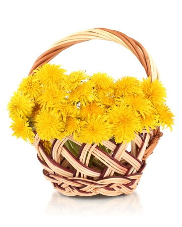 Dandelion flowers in wicker basket isolated on white photo