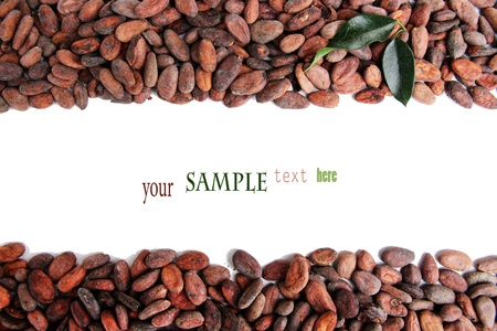 Cocoa beans with leaves isolated on white photo