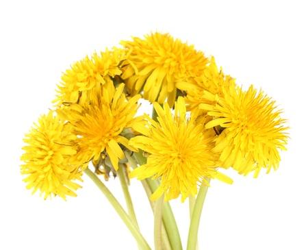 pedicel: Dandelion flowers isolated on white Stock Photo
