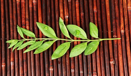 Green leaves on bamboo mat background photo