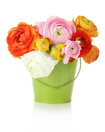 buttercups: Ranunculus (persian buttercups) in pail, isolated on white
