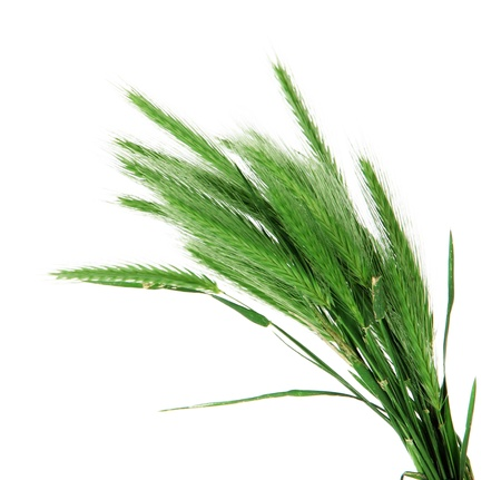 spikelets: Many spikelets isolated on white