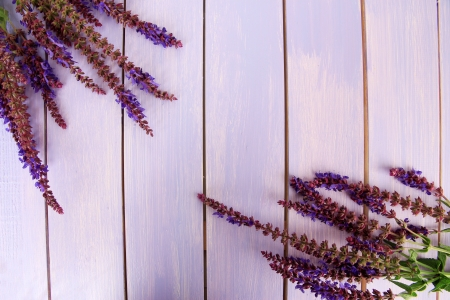 Salvia flowers on purple wooden background photo
