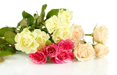 amorousness: Beautiful colorful roses close-up isolated on white Stock Photo