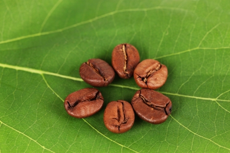 Coffee grains on green leaf close-up photo