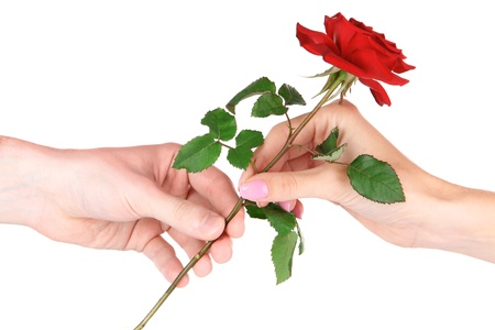 Mans hand giving a rose isolated on white photo