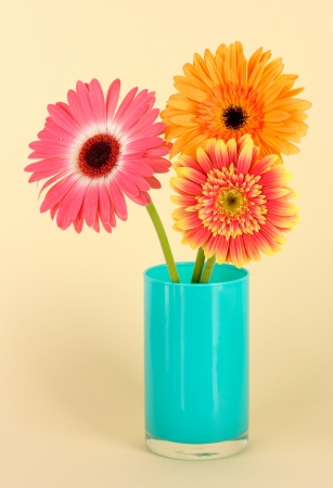 Beautiful Gerber flowers on light background photo