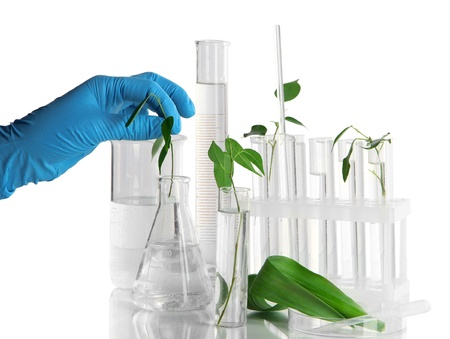 group of plants: Test tubes with plant on light background