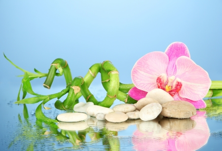 Still life with green bamboo plant, orchid and stones, on blue background photo