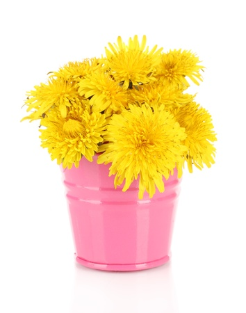 Dandelion flowers in bucket isolated on white photo