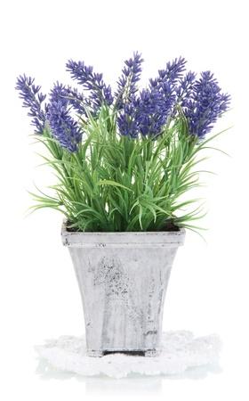 화이트 절연 나무 냄비에 아름다운 라벤더
