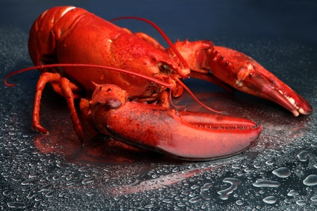 lobster tail: Red lobster on blue background Stock Photo
