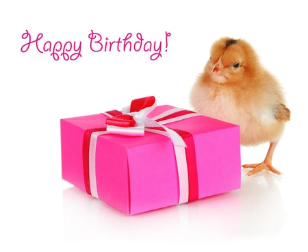 Little chicken with gift isolated on white photo
